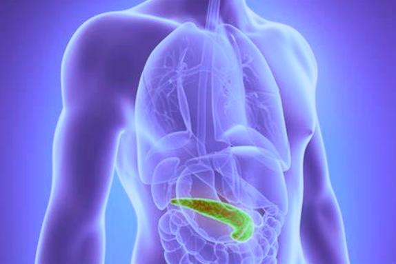 hasnyálmirigy inzulin termelésért felelős szerv