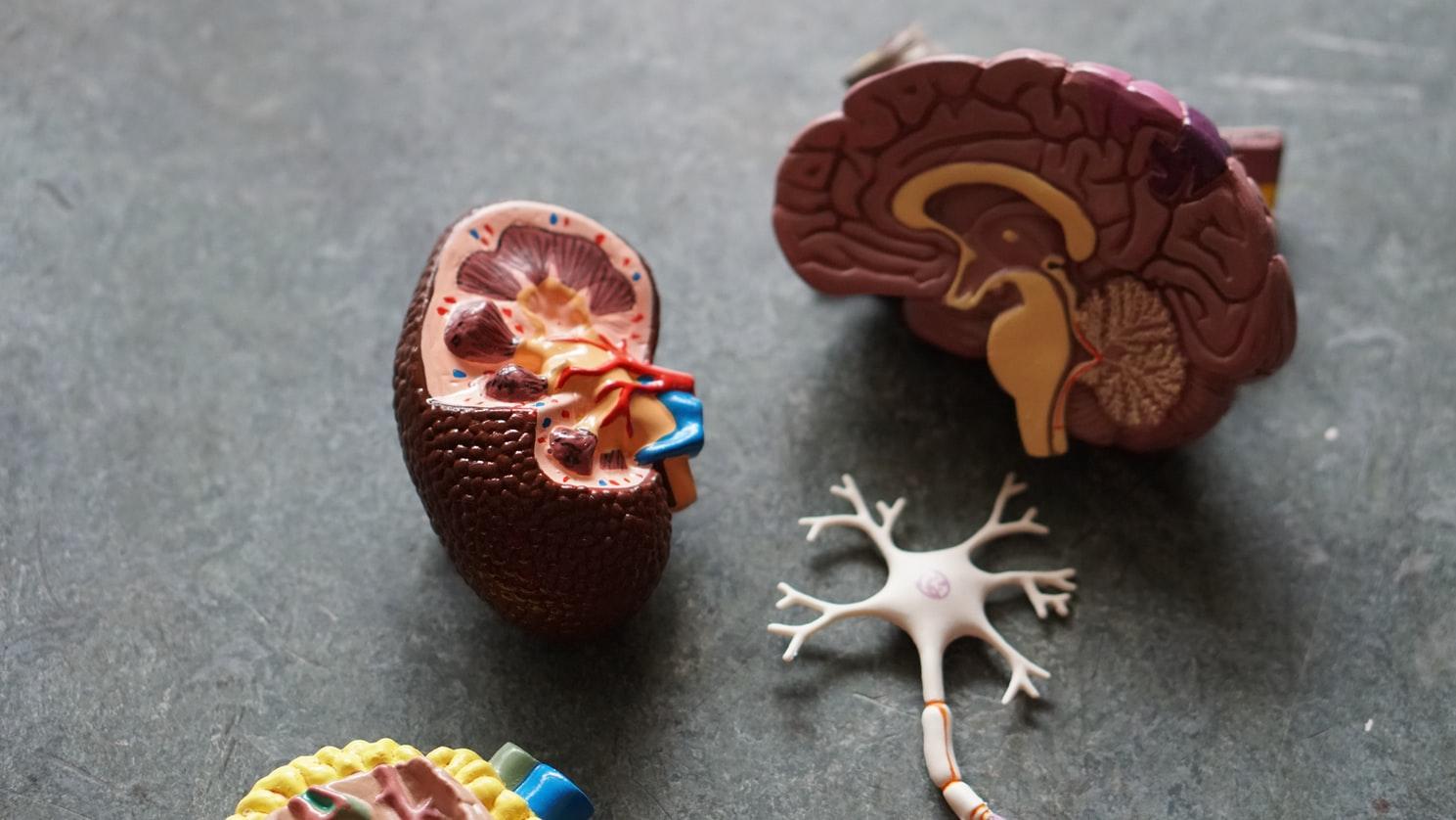 Veseciszta – Tünetek, okok, kezelés