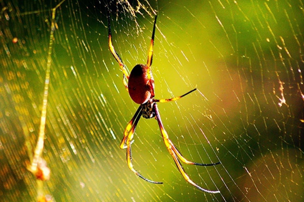 Arachnophobia, avagy a pók undor kezelése